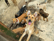 A lot of stray dogs Stock Images