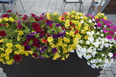 A lot of summer flowers multicolored . Royalty Free Stock Photography
