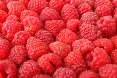 A lot of sweet red raspberries. Stock Photography