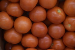 It is a lot of tomatoes of the identical size. Red tomatoes. Tomatoes for salad. Background vegetables stock photo