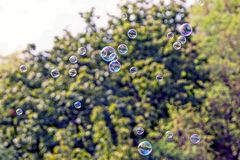 Color soap bubbles fly in the air against the background of green trees. A lot of transparent soap bubbles fly against the background of green tree branches in stock images