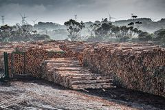 A lot of tree trunks in a lumber yard. A lot of tree trunks in a lumber yard Royalty Free Stock Image