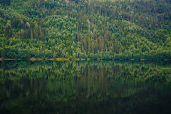 A lot of trees reflecting in water Stock Photography