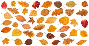 lot of various dried autumn fallen leaves isolated Stock Photos