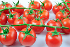 A lot of vine tomatoes (solanum lycopersicum) on white background Stock Images