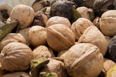 A lot of walnuts. In bucket stock photography
