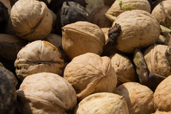 A lot of walnuts. In bucket Stock Photo