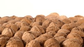 A lot of walnuts, on white, rotation stock video footage