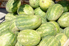 Lot of watermelons Stock Image
