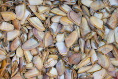 A lot of Wedge Shells clams  after the harvest Stock Image