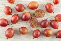 Fresh raw red gooseberry on grey wood. Lot of whole fresh red gooseberry hinnomaki variety flatlay on grey wood Stock Images
