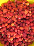 A lot of wild strawberries Royalty Free Stock Photography