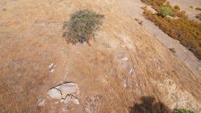 Lot wokoło osamotnionego trwanie drzewa zbiory wideo