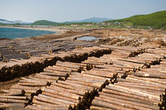 Lot of wood Stock Images