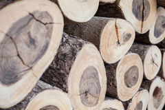 A lot of wood log Royalty Free Stock Image