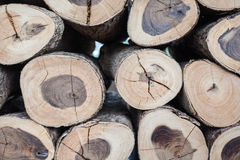 A lot of wood log Stock Photography