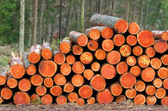 A lot of wood piles. In front of the forest Stock Photo