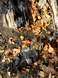 A lot of yellow autumn leafs on tree bark Royalty Free Stock Photo