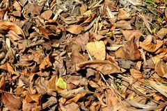 A lot of yellow dry leaves lay on the ground Royalty Free Stock Photos
