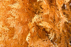 A lot of yellow and orange dry leaves Royalty Free Stock Photos