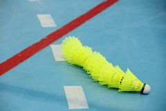 Lot yellow shuttlecocks on the edge of the badminton court stock image