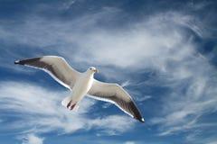 lota seagull zdjęcia stock