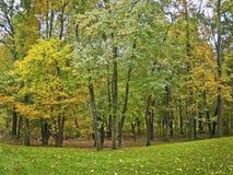 Lote arborizado do outono Imagem de Stock