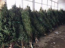 Lote da árvore de Natal Fotos de Stock
