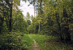 Lote da floresta Fotografia de Stock