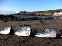 Lote das cabeças dos peixes sobre a areia Fotografia de Stock