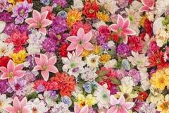 Lote das flores Foto de Stock