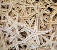 Lote de tamanhos diferentes das estrelas do mar Foto de Stock Royalty Free