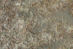 Lote do fluff e das sementes do álamo no asfalto, fundo da natureza fotografia de stock royalty free