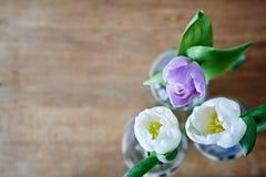 Lote do uso tulipscreative da mola do foco fotos de stock royalty free