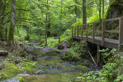Lotenbach Gorge in Blach Forest, Germany Royalty Free Stock Images