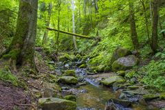 Lotenbach Gorge in Blach Forest, Germany. Lotenbach Gorge in Blach Forest in Germany Royalty Free Stock Photography