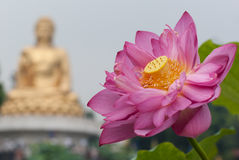 Lotes and budda. In temple royalty free stock photography