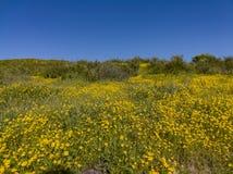 Lotes da flor da flor selvagem em Diamond Valley Lake foto de stock