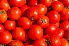 Lotes da opinião bonita do fundo dos tomates vermelhos da parte superior imagens de stock royalty free