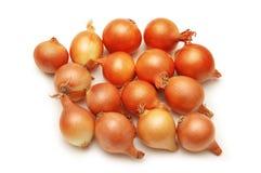 Lotes das cebolas isoladas no whi Fotografia de Stock Royalty Free