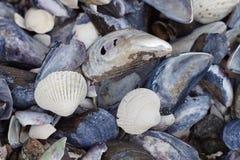 Lotes das conchas do mar, fim acima fotografia de stock royalty free