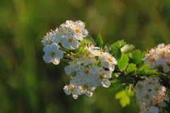 Lotes das flores em um ramo imagem de stock royalty free