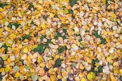Lotes das folhas caídas na grama Imagem de Stock Royalty Free