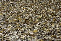 Lotes das folhas secas na terra imagem de stock