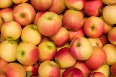 Lotes das maçãs fotos de stock royalty free