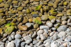 Lotes das pedras sob a água e dois caranguejos pequenos foto de stock royalty free