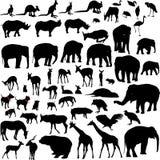 Lotes das silhuetas animais Ilustração do Vetor