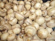 Lotes de cogumelos frescos imagens de stock royalty free