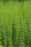 Lotes de ferraduras verde-clara em um dia ensolarado fotografia de stock royalty free