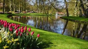 Lotes de tulipas e de narcissuses agradáveis Frame panorâmico Parque no dia agradável Povos que andam e que falam video estoque